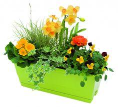 3 jardini res d 39 automne fleuries articles. Black Bedroom Furniture Sets. Home Design Ideas