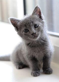 Un pequeño gatito curioso es el mejor recordatorio de lo que la juventud se trata. Jo Kittinger.