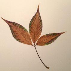 25 #flowleaf2015 #autumncolors #onedrawingaday #aquarelle #watercolor