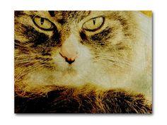 Cat Eyes photograph 8x10 fine art print vintage look feline portrait rustic wall decor, $25.00 by KneeDeepOriginals