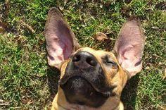 Doggie Joy!  on BloggieDoggie.com