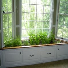 Grow Vegetables Indoors Over Winter Gardens Window boxes and