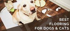 6 Best Pet-Friendly Flooring Options for Your Dogs & Cats Best Wood Flooring, Types Of Flooring, Flooring Options, Flooring Ideas, Best Vacuum, Types Of Carpet, Cat Condo, Dog Friends, Best Dogs