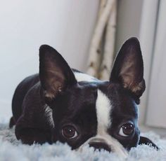 All ears!!
