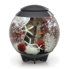 With its hidden waterline, the BiOrb Halo 60 Liter Grey Aquarium with MCR Lighting is a visually seamless aquarium and features multi-color remote controlled lighting. At the touch of a button, your aquarium can be lit by any of the sixteen pre-set colors Aquarium Biorb, Betta Aquarium, Aquarium Kit, Glass Aquarium, Nature Aquarium, Aquarium Filter, Aquarium Design, Fish Aquariums, Aquarium Supplies