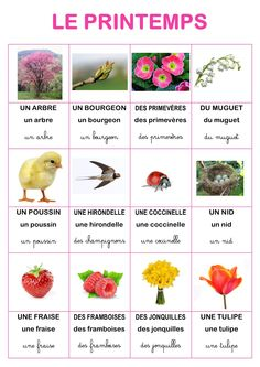 imagier nature du printemps d'Elisa Swaney Preschool Themes, Montessori Activities, French Education, Kids Education, How To Speak French, Learn French, Spring Activities, Activities For Kids, Education Application