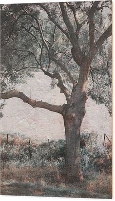 Tree Wood Print featuring the photograph Shadow Tree by Jenny Rainbow Shadow Tree, Art Prints For Sale, Got Print, Art Techniques, How To Be Outgoing, Fine Art Photography, Beautiful Images, Fine Art America, Photographic Prints