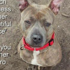 WILL YOU BE HER HERO... Robin is available for adoption at: Brookhaven Animal Shelter 300 Horseblock Road Brookhaven, NY 11719 (631) 451-6950 Another... - Tina Behla - Google+