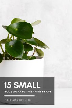 Are you looking for something to add to your shelves, side table, or corner space? Regardless of where it is, these small houseplants are perfect for decorating even the smallest of spaces! #fortheloveofplants #decoratewithplants Small Indoor Plants | Houseplants for Small Spaces | Indoor Plants for Small Spaces | Small Houseplants | Houseplants for Decorating Bookshelves | Interior Design | Home Design | Small Indoor Plants, Little Plants, House Plants Decor, Plant Decor, Interior Plants, Interior Design, Apartment Plants, Decorating Bookshelves, Dish Garden