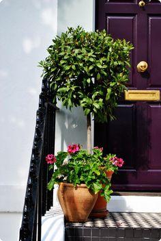 purple door!