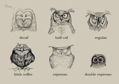 coffee Owls