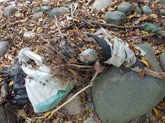 La Fundación Ambiental y Cultural FAMBARU, a través de su programa de voluntarios Ambientales: Protectores del Agua, puso en marcha con el cuerpo de bomberos del Municipio de Alvarado Tolima, esta campaña para promover la limpieza de residuos y desechos tóxicos para nuestro medio ambiente que se han acumulado en las riberas del Río y a su vez llevar un mensaje a la sociedad sobre la necesidad de ser responsables con todos nuestros desechos y respetuosos con el entorno natural que nos rodea. Hiking Boots, Natural, Packing Light, Water Quality, Fire Dept, Volunteers, Cleaning, Nature, Au Natural