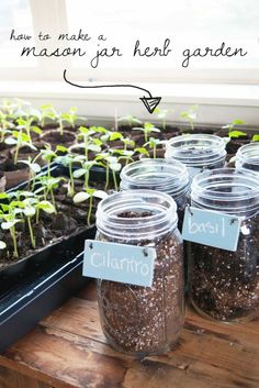 DIY Mason Jar Herb Garden Step by step tutorial
