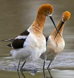 LAS COLECCIONES DE MI VIDA: Aves