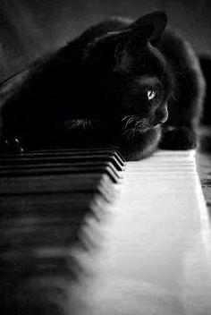 The Cult Cat (@Elverojaguar) | Twitter