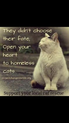 Open your heart to homeless cats.