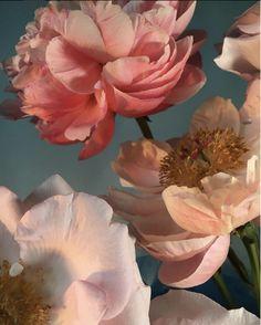 Nature Aesthetic, Flower Aesthetic, Pop Art Fashion, Flower Wallpaper, Aesthetic Wallpapers, Flower Power, Beautiful Flowers, Asian Art, Nature Photography