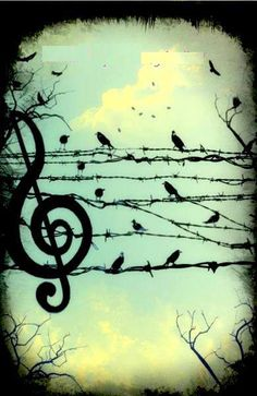 .birds on a wire