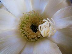 Alien?  Sea creature?  Nope :)  A beautiful cactus flower inside.