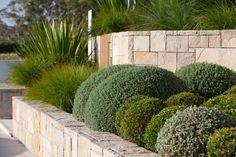 modern garden with sculptured plants Sculptural Clouds Shaped shrubs have rema. modern garden with Landscaping Shrubs, Garden Shrubs, Modern Landscaping, Front Yard Landscaping, Coastal Landscaping, Landscaping Ideas, Modern Planting, Bush Garden, Planting Plan