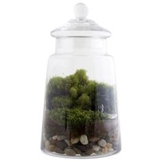 Eclectic Terrariums by Design Public