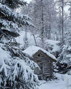 I Love Snow, Let It Snow, Ur Beautiful, Beautiful Places, Winter Time, Winter Holidays, Xmas, Christmas Tree, Elf