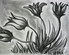 Wild Flowers Drawing by Rachel Harris
