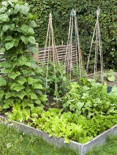 Veggie Garden - 10 tips