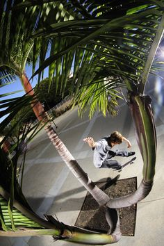 Palm Tree Gap