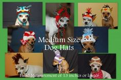 Medium to large Size Dog hats -Dog Beanie  Any Hat in my listings | PoshPoochDesigns - Pets on ArtFire