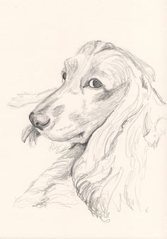I now offer #sketches of your #pets just like this one I create before beginning work on my #pastel #painting. These 'preliminary' sketches are not about capturing detail. I use them as a useful exercise in getting to know the animals lines, tones and character – They are a great way for me to prepare for more detailed pieces of work.