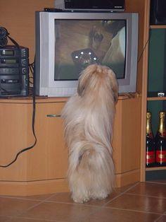 TV kijk ik graag. Hier een filmpje van mezelf aan het bekijken!!!