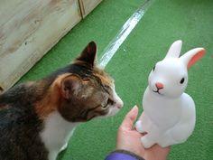 ウサギのランプの画像 | エビス文具店、店主のブログ Rabbit night light #bunnyandfriend