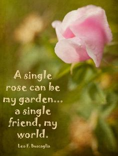 Rose friendship quote. Jingles should say this!