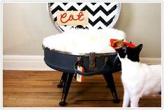 regali di Natale per gatti