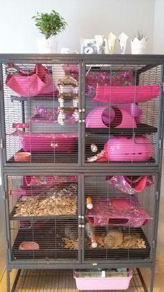 Homemade Rat Cage Pet Rats Rat Cage Pet Rat Cages Pet Rats