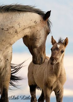 Wild Mustang Stallion and Foal Baby Horses, Cute Horses, Horse Love, Wild Horses, Draft Horses, All The Pretty Horses, Beautiful Horses, Animals Beautiful, Cute Animals