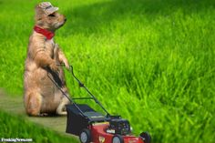 Lawn Mower Pictures - Freaking News