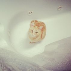 Honey in the tub. She loves the water.