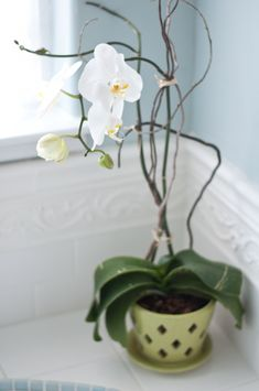 Orchid tips:  1. Repot after it loses it's blooms.  2. Use bark or sphagnum moss  3. Avoid overwatering- set ice cubes on surface to let them slowly melt instead of traditional watering. A humid room also helps (like a bathroom)  4. Fertilize twice a month, usually with less than recommended on the package.  5. Filtered light, not direct sunlight.
