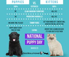 Did you know that having, caring, and loving our pets eliminates stress? Are you a puppy or kitten or both kinda peep? Happy M, Are You Happy, People Pleaser, National Puppy Day, Studio Portraits, Best Relationship, Super Powers, Photo Sessions, Puppy Love