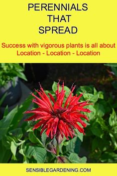 Perennials that Spread • SENSIBLE GARDENING AND LIVING