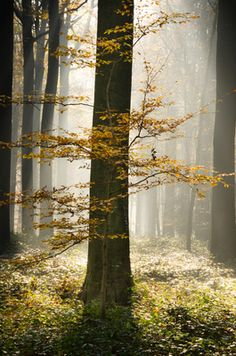 National Parks in Belgium