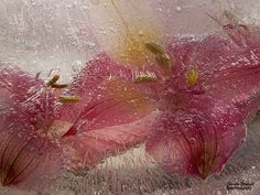 Flower Photography, Seed Pods, Berries, Seeds, Frozen, Nature, Flowers, Plants, Painting