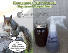 The 25 Best Squirrel Repellant Ideas On Pinterest Keep