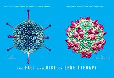 Gene Therapy Emerges From Disgrace to Be the Next Big Thing, Again BY CARL ZIMMER 08.13.13