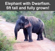 Poor guy , the short life is a struggle . Believe me I know! I love elephants .