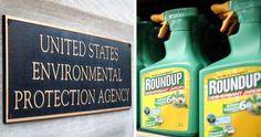 'Mistaken' Release of Glyphosate Report Raises Questions Over EPA's Ties to Monsanto