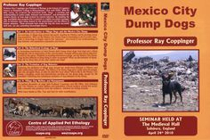 Ray Coppinger DVD - Seminar: Mexico City dump dogs (2010)    Meer info: http://www.doggo.nl/artikelen/tips-weetjes/honden-dvd.php