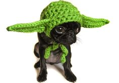 Epic Pet Accessories (Yoda).